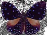 Foto af en sommerfugl